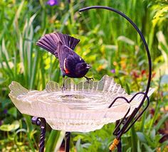 Bird Bath Ideas | bird baths to your yard or garden is a great way to attract more birds ...
