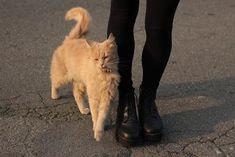 Imagen de cat, black, and grunge I Love Cats, Cute Cats, Pretty Cats, Baby Animals, Cute Animals, Cat Lady, Fur Babies, Dog Cat, Creatures