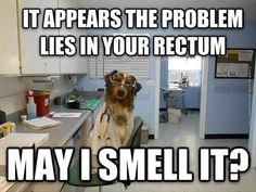 Dogs will do anything to smell it