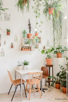 Wildernis, boutique de plantes urbaines - Lili in wonderland                                                                                                                                                                                 Plus