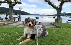Hund am Wörthersee in Kärnten. Im Beitrag: Hundefreundliche Ausflugsziele in Kärnten