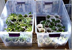 portable mini green house for spring starts @Mom - Now we can start all those seeds we bought.