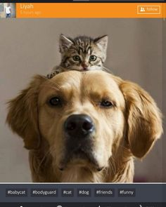 https://x-uniting.com/bestphotos/all  Best photo of today .. your favorite Pets.  #best #bestphotos #today #favorite #pets #dog #cat #detail #friends #sweety #bodyguard #socialnetwork