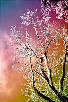 snow, abstract, colorful, rainbow, gaudy, tree, winter, sky, clouds