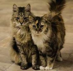 FELINE RESCUE FOUNDATION OF ALBERTA - Opportunity For Old Cats - CanadaHelps