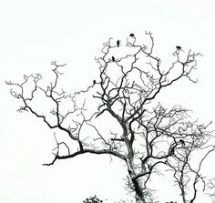 Minimal with birds siting on branches