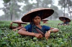 Tea Estate, Bangladesh/ Photography by Steve McCurry / Here you can download Steve's FREE PDF Catalog and order PRINTS /stevemccurry.com/...