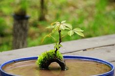 bonsai gardening ideas! This website holds many fresh photos of miniature bonsai pots and plants.