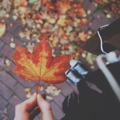 autumn leaves falling a y n i c o l e Autumn Day, Hello Autumn, Autumn Leaves, Fall Winter, Fallen Leaves, Red Leaves, Autumn Harvest, Autumn Aesthetic, Lovely Smile