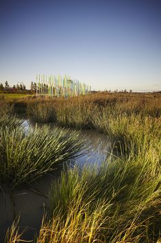 Toomuc Creek wetland, Pakenham, Victoria en Australie by Fitzgerald Frisby Landscape Architecture Landscape Architecture, Landscape Design, Tree Psd, Wetland Park, House In Nature, Urban Park, Rain Garden, Visionary Art, Water Features