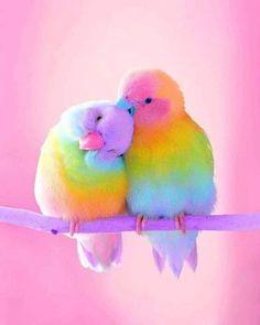 Diamantmalerei – Rainbow Parrot – Full of Beauties Baby Animals Super Cute, Cute Little Animals, Cute Funny Animals, Cute Cats, Cute Birds, Pretty Birds, Beautiful Birds, Animals Beautiful, Pretty Animals