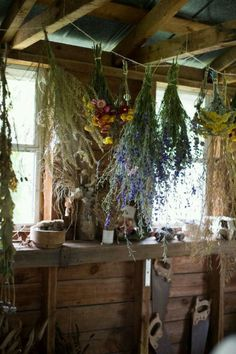 Looks like our little kitchen when the herb growing season comes to an end..we save EVERYTHING!