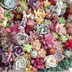 Doesn't get much better than this #leafandclay #succulents cc: @limpopo_v_v_ www.leafandclay.co Like and Repin. Thx Noelito Flow. http://www.instagram.com/noelitoflow