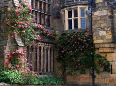 We came to a wall covered with climbing roses which I recognized at once: This must be where Father had met the Beast.