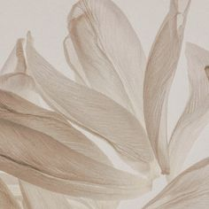 High Key Photography, Fabric Photography, Cream Aesthetic, Brown Aesthetic, Aesthetic Backgrounds, Aesthetic Wallpapers, Abstract Watercolor Art, Textured Background, Wall Collage