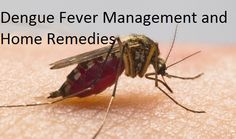 Dengue or dengee is a fever caused by the family of viruses from Aedes aegypti mosquito bite. It is a mosquito borne disease is called break bone fever
