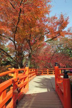 Bridge, Kyoto