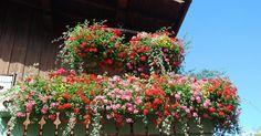 Consigue un jardín o terraza preciosos