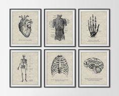 Vintage Anatomy Set of 6 Art Prints - Antique Human Figures - Scientific Anatomical Book Art - Medical Illustrations Office Decor