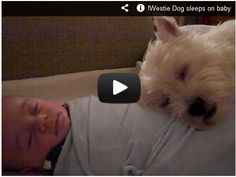 Dog sleeps on baby! Watch here:  http://gdurl.tk/6E