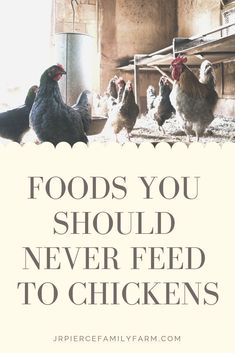 Foods you should avoid feeding to your flock to keep them healthy and productive Diy Herb Garden, Herb Garden Design, Garden Ideas, Gardening For Beginners, Gardening Tips, Vegetable Gardening, Container Gardening, Chicken Eating, Homesteads