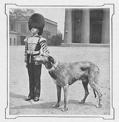 """Brian Boru: The Irish Guards' Wolfhound printed in """"The Irish Wolfhound"""" by Fred Gresham in The New Book of the Dog by Robert Leighton (Cassell and Company, Limited: 1907)"""