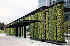 En la Ciudad de México las áreas verdes son pocas y están en peligro de extinción. Ante su inevitable desaparición, los habitantes han tenido que crearlos en los lugares más inesperados, como las fachadas de los edificios o las azoteas. Ahora, la vía de 30 kilómetros que rodea la ciudad será un enorme jardín.