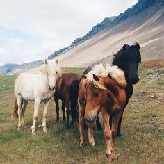 Beautiful horses in a wide open field at edge of mountain.
