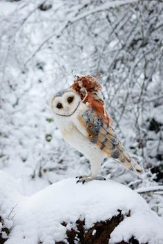 Aoife & Finvarra by Lavender & Lark - needle felted owl & faerie.