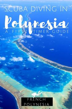 Discover how to make the most of a scuba diving trip to French Polynesia. Where tis the best divig in French Polynesia ? What to see? Where to stay? When is the best season to go diving in French Polynesia? Underwater Photography, Marine Photography, Free Travel, Travel Tips, French Trip, Viewing Wildlife, Snorkelling, French Polynesia, Sharks