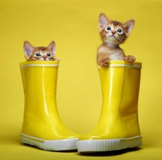 kittens in rain boots