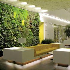 SPA, cilt bakım ve detoks merkezlerinde kullanılan «yeşil» bitkiler; sinir sistemi ve hücre onarımı, kan akışkanlığı, kas, deri ve doku yenileyici etki yaratır.