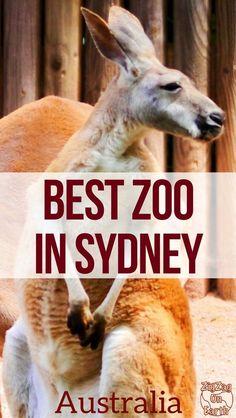 Sydney Australia Travel Guide - Which zoo to visit in Sydney - Taronga zoo vs Featherdale Wildlife Park vs Wildlife Sydney zoo