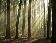 Evolution II Fotobehang Misty Forest 1178