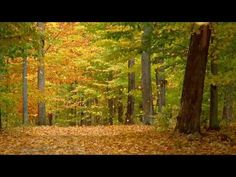 Autumn Leaves - Nat King Cole.  A lovely video for a beautiful classic song.