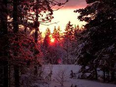#winter #nature #beauty