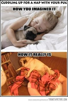 Funny Sleeping with a pug photo - http://www.picturesofdogs.org/pin/687/