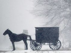 An Amish horse and buggy waits to cross a roadway during a snowstorm in Middlefield, Ohio.