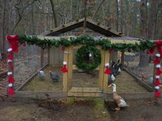 Dressing up your chicken run may be the easiest holiday touch! #HolidayHenHouse www.FreeHenHousePlans.net