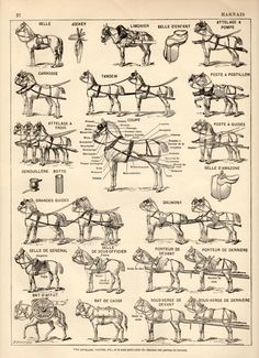 Horse Harness Antique Print 1897 Lithograph Draft by Craftissimo, €12.00