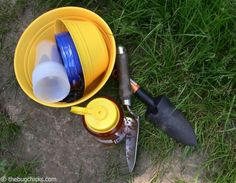 Inexpensive Ground Insect Traps
