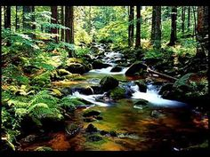 Das geheime Leben der Bäume – Peter Wohlleben - YouTube