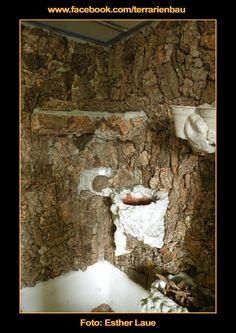 Bild 6 - Bau und Einrichtung Regenwaldterrarium mit Wasserfall - Korkpuzzel