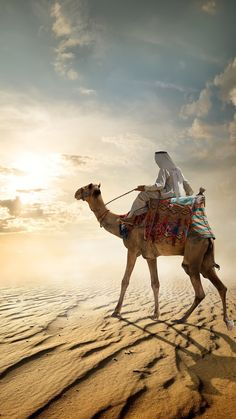 Desert Life, Lion Pictures, Scenery Wallpaper, Animal Drawings, Poses, Album, Painting, Animals, Camels