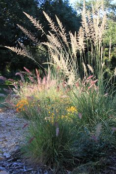 This week (October 14-20) is Texas Native Plant Week  and I'm celebrating by highlighting native plants in my garden.   We learn over and ov...