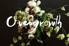Overgrowth by Parker Fitzgerald and Riley Messina Graphic Design Letters, Lettering Design, Parker Fitzgerald, Creative Inspiration, Design Inspiration, Design Art, Floral Design, Typography Love, Typography Images
