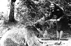 PIĄTA STRONA ŚWIATA: Szeregowy Wojtek, niedźwiedź z korpusu Andersa