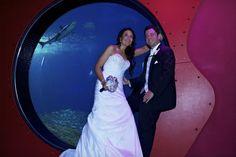 Bait Ball Room of the Florida Aquarium http://celebrationsoftampabay.com/