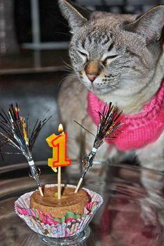 Cat Birthday Party #CatBirthday
