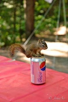 Baby Squirrel | What Your Favorite Baby Animal Says About How You Will Die